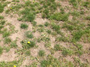 sod replacement needed neptune beach florida